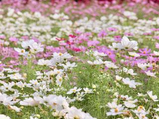 花の写真・画像素材[2672880]