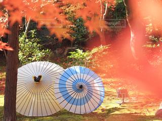カラフルな傘を閉じるの写真・画像素材[2772980]