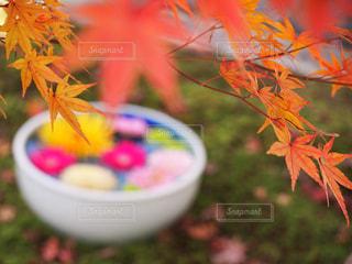 植物にピンクの花が咲く木の写真・画像素材[2772981]