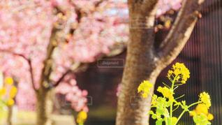 花のクローズアップの写真・画像素材[2978137]