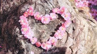 花のクローズアップの写真・画像素材[2978158]