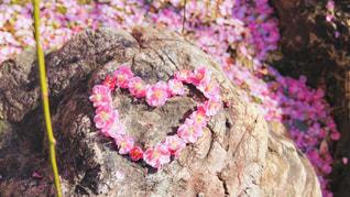 花のクローズアップの写真・画像素材[2978153]