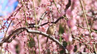木の枝に止まっている小鳥の写真・画像素材[2978161]
