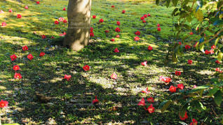 畑の中の色とりどりの花のグループの写真・画像素材[2978165]