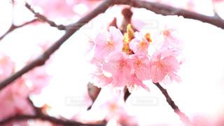 花のクローズアップの写真・画像素材[2990441]