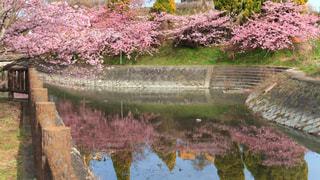 庭のクローズアップの写真・画像素材[2990444]