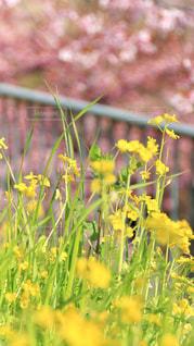花のクローズアップの写真・画像素材[2990445]