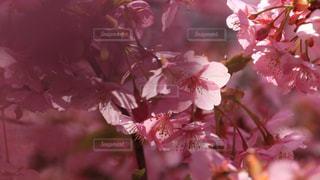 植物の上のピンクの花のクローズアップの写真・画像素材[2990469]