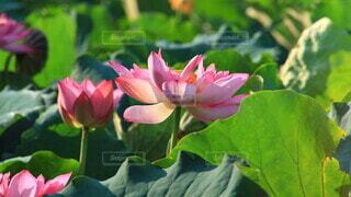 花のクローズアップの写真・画像素材[3623601]