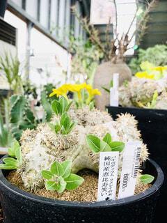 インテリアになる植物の写真・画像素材[4344070]