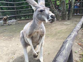 動物園の写真・画像素材[364238]