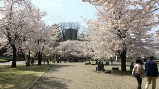 春 - No.366196