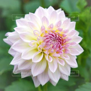 花の写真・画像素材[364476]