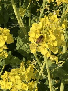 花の写真・画像素材[381799]