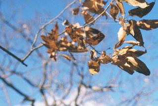 自然の写真・画像素材[366224]
