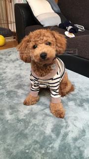 着ぐるみを着た犬の写真・画像素材[766259]