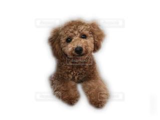 犬の隣に座っている栗毛テディベアの写真・画像素材[766285]