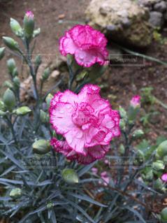花の写真・画像素材[366635]