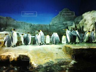 ペンギン - No.369726