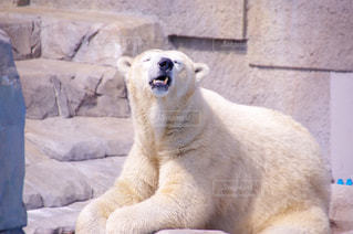 動物の写真・画像素材[365775]