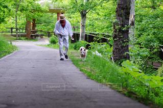 犬の写真・画像素材[365874]