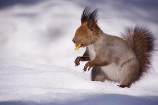 冬の写真・画像素材[365875]