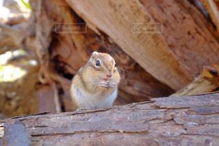動物の写真・画像素材[366024]