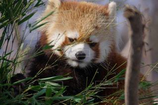 動物の写真・画像素材[366145]