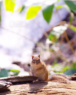 動物の写真・画像素材[366146]