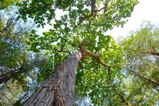 森林の写真・画像素材[367972]
