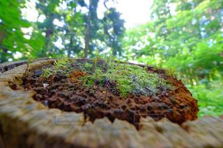 森林の写真・画像素材[367973]