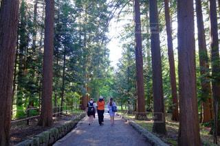 森林の写真・画像素材[367974]