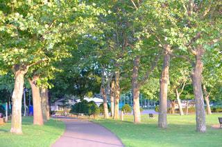 秋色の散歩道の写真・画像素材[791142]