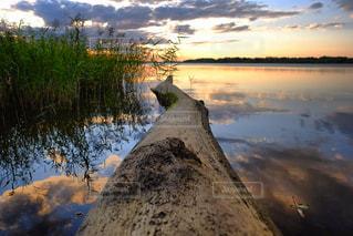 夕陽へつづく。の写真・画像素材[806168]