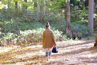 落ち葉中を歩く女性の背中の写真・画像素材[1420593]