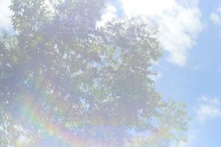 残暑の写真・画像素材[1421822]