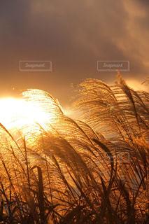 夕暮れの写真・画像素材[365585]
