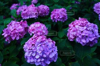 花の写真・画像素材[365596]