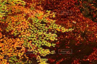 秋の写真・画像素材[366328]