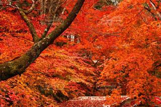 秋の写真・画像素材[366330]