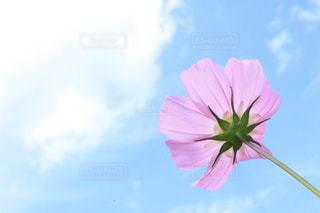 花の写真・画像素材[366652]