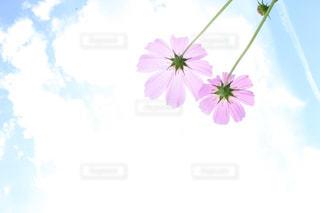 花の写真・画像素材[366657]