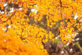 秋の写真・画像素材[369944]