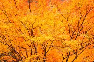 秋の写真・画像素材[369945]