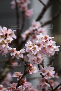 自然の写真・画像素材[372227]