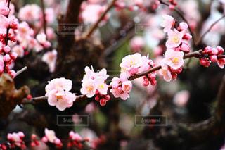 自然の写真・画像素材[372256]