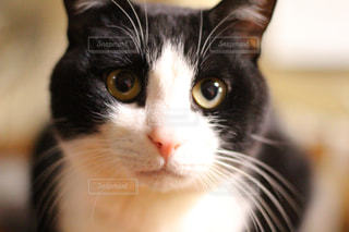 猫 - No.379356