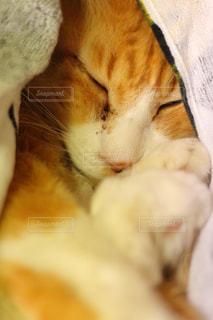猫の写真・画像素材[379361]