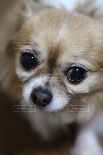 犬の写真・画像素材[379370]