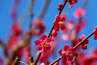 花の写真・画像素材[379558]